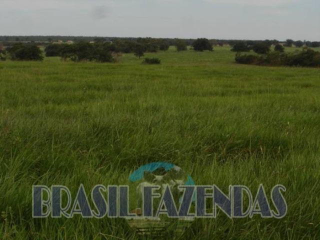 Fazenda em Barreiras. Oeste da Bahia - Foto 15