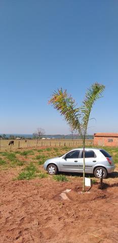 Terreno p/rancho km 11 Pereira barreto APENAS 15.000 - Foto 2