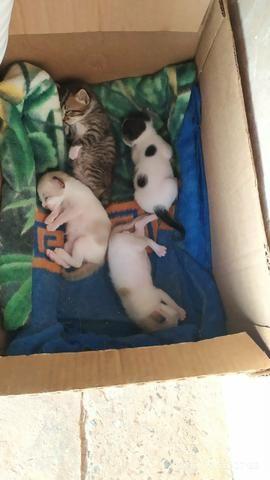 Doação de gatinhos - Foto 6