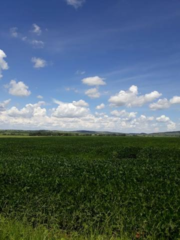 Fazenda Agrícola em Palminopolis-GO. 50 Alq. c/ 30 em Lavoura