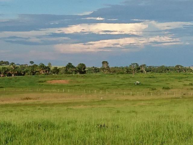 Fazenda Agrícola em Palminopolis-GO. 50 Alq. c/ 30 em Lavoura - Foto 6