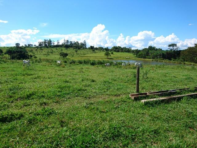 Fazenda 70 Alqueires em Cristianópolis-GO (Lavoura e Gado) - Foto 2