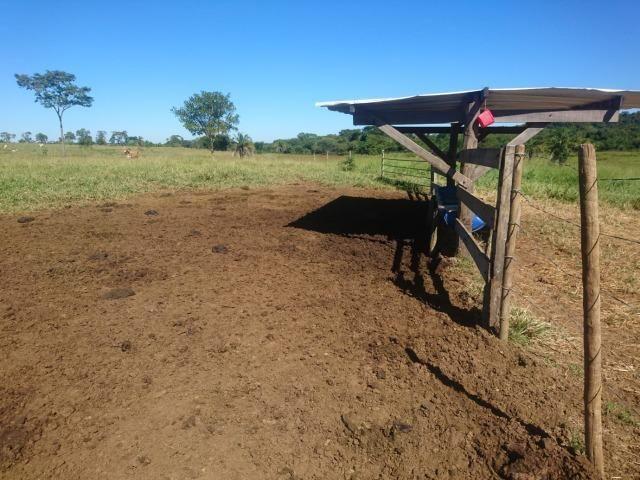 Fazenda Agrícola em Palminopolis-GO. 50 Alq. c/ 30 em Lavoura - Foto 16