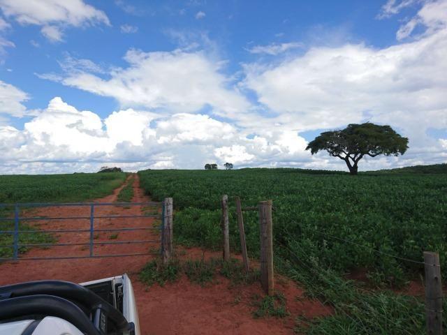 Fazenda 70 Alqueires em Cristianópolis-GO (Lavoura e Gado) - Foto 4