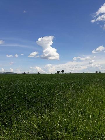 Fazenda Agrícola em Palminopolis-GO. 50 Alq. c/ 30 em Lavoura - Foto 2