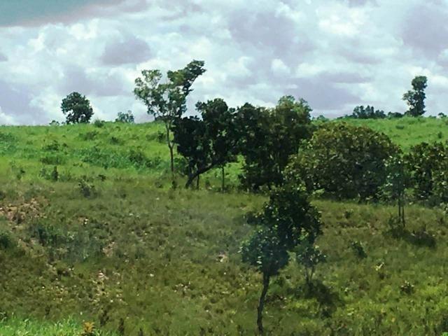 Fazenda de 137 alqueires em Abreulândia - To - Foto 9
