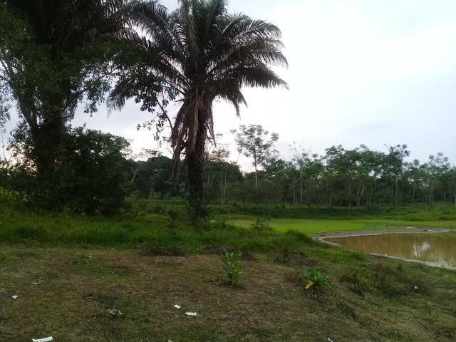 Alugo chácara 3 minutos do centro, 2 hectares - Foto 4