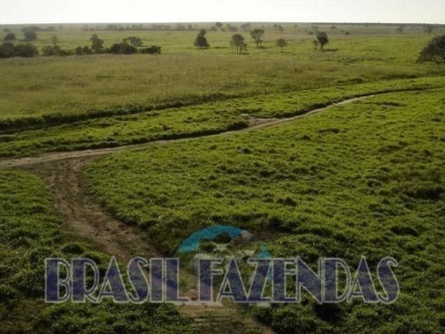 Fazenda em Barreiras. Oeste da Bahia - Foto 9