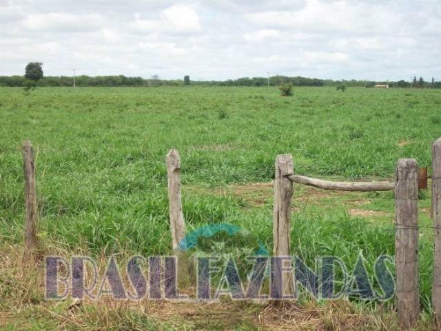 Fazenda em Barreiras. Oeste da Bahia - Foto 17
