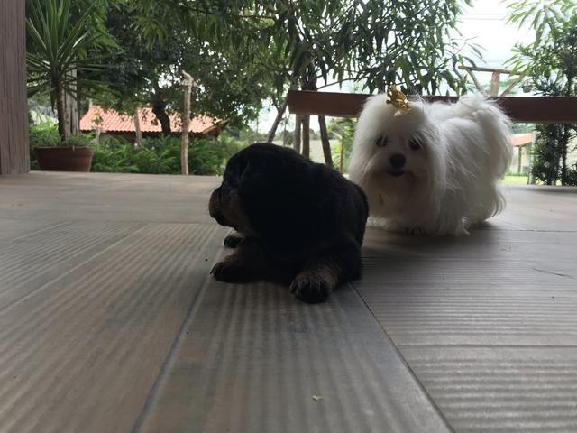 Cães - Foto 5