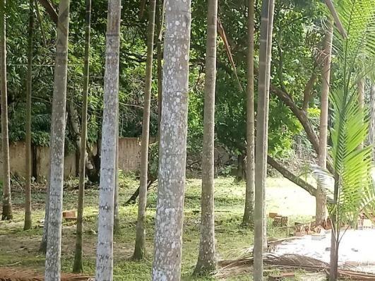 197 - Belíssimo sitio Situado No Jardim Neópolis Venda R$200.000,00