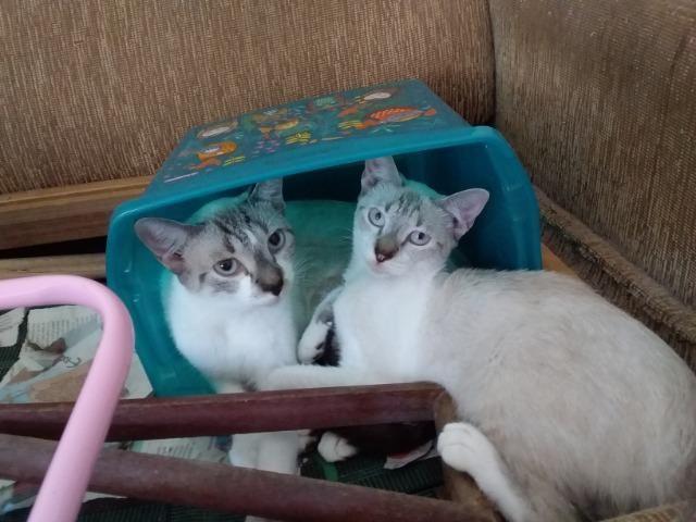 Animais para adoção - Foto 6