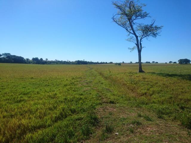 Fazenda Agrícola em Palminopolis-GO. 50 Alq. c/ 30 em Lavoura - Foto 11