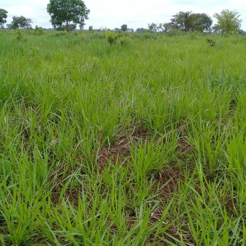Fazenda Boa de Terra em Cocalinho - MT - Foto 20