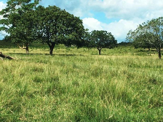 Fazenda de 137 alqueires em Abreulândia - To - Foto 4