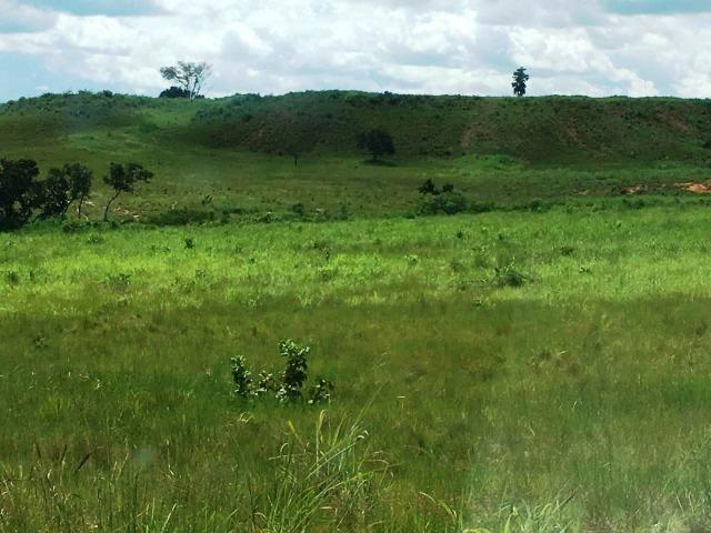 Fazenda de 137 alqueires em Abreulândia - To - Foto 14
