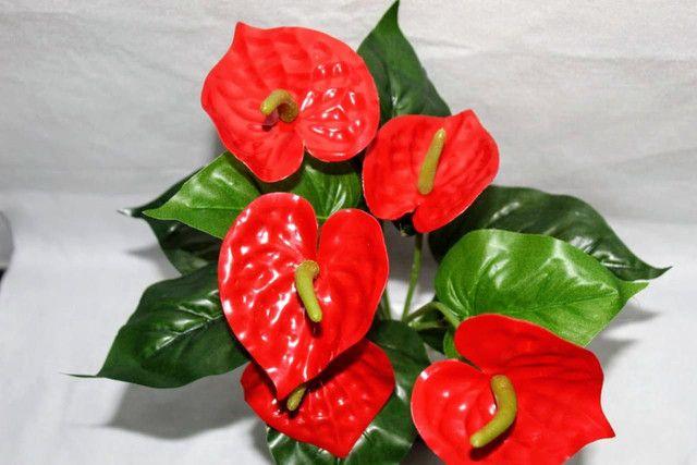 Planta antúrio Vermelha ( Envio Correios ) - Foto 3