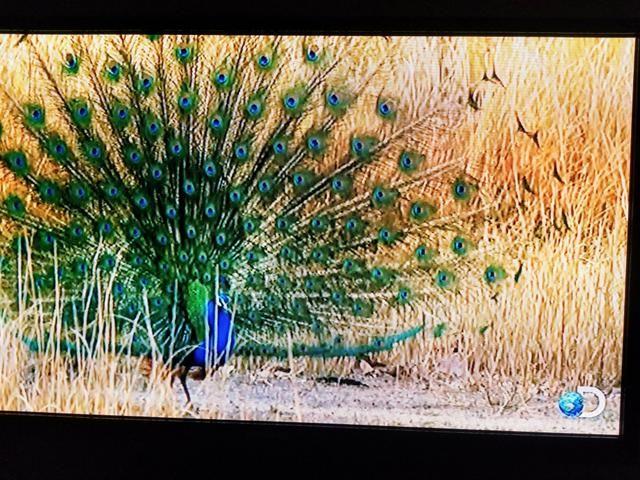 TV Samsung Plasma 51 3D