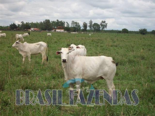 Fazenda em Barreiras. Oeste da Bahia - Foto 18