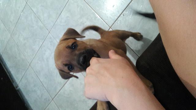 Doação de cachorro - Foto 2