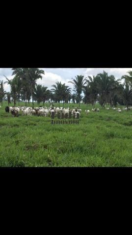Chácara à venda em Nova mamoré, Rondônia cod:118