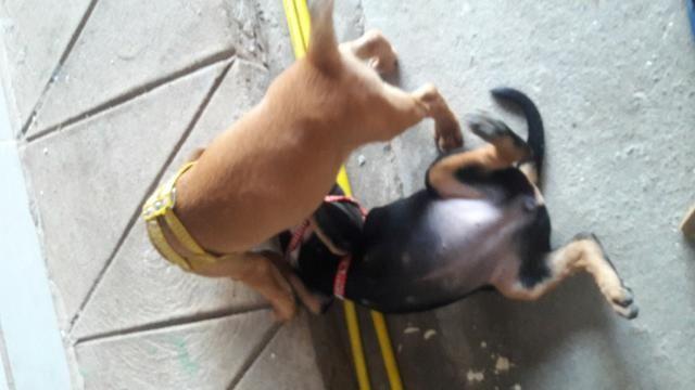Doação de cachorro - Foto 4