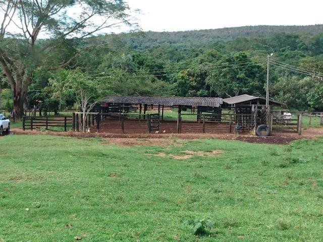 Fazenda 70 Alqueires em Cristianópolis-GO (Lavoura e Gado) - Foto 3