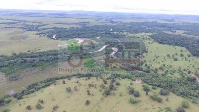 220 Alq. (Plana + Asfalto + Rio). 70 km de Goiânia - Foto 7
