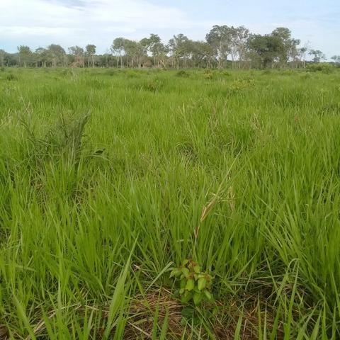 Fazenda Boa de Terra em Cocalinho - MT - Foto 15