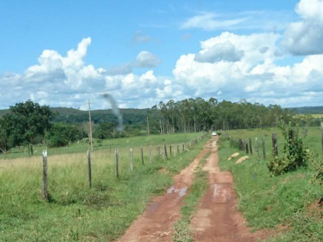 Fazenda 70 Alqueires em Cristianópolis-GO (Lavoura e Gado) - Foto 7