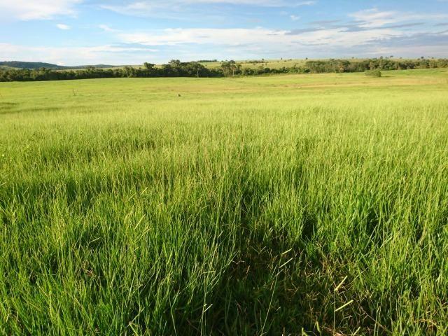 Fazenda Agrícola em Palminopolis-GO. 50 Alq. c/ 30 em Lavoura - Foto 20