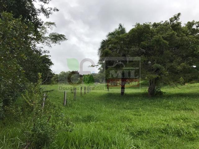 220 Alq. (Plana + Asfalto + Rio). 70 km de Goiânia - Foto 17