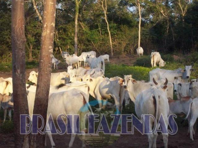 Fazenda em Barreiras. Oeste da Bahia - Foto 16