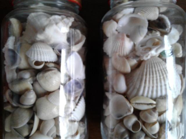 Conchas, búzios e estrelas do mar artesanato
