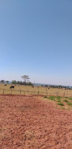 Terreno p/rancho km 11 Pereira barreto APENAS 15.000 - Foto 4
