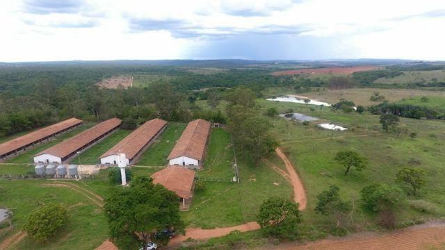 Fazenda 70 Alqueires em Cristianópolis-GO (Lavoura e Gado) - Foto 9