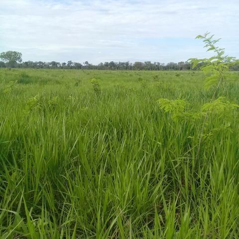 Fazenda Boa de Terra em Cocalinho - MT