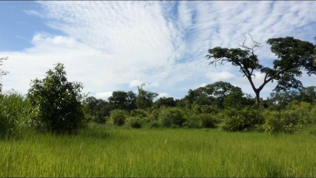 726 Há Alô Brasil - MT. Barata > 2,5 Milhões > 50% Permuta - Foto 5