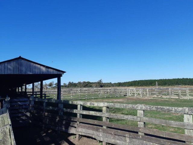 Fazenda 390 ha Multiprodutiva no Litoral RS - Foto 6