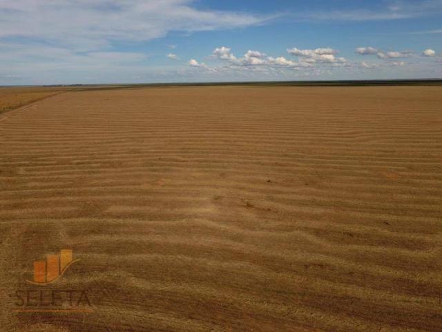 Fazenda à venda, 12650000 m² por r$ 16.000.000 - vila rica - barreiras/ba - Foto 5