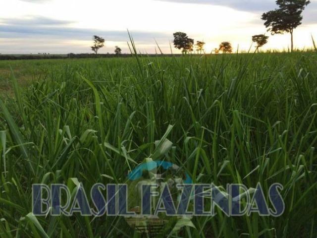 Fazenda em Barreiras. Oeste da Bahia - Foto 2