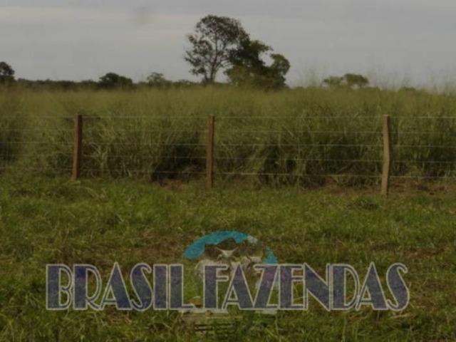 Fazenda em Barreiras. Oeste da Bahia - Foto 13