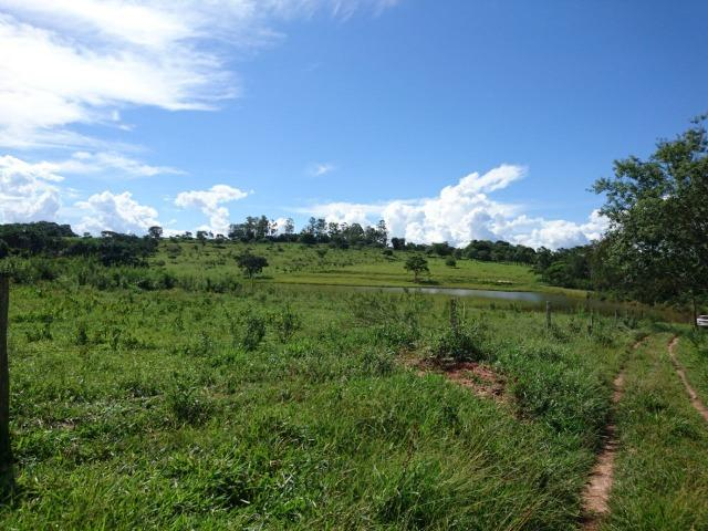 Fazenda 70 Alqueires em Cristianópolis-GO (Lavoura e Gado) - Foto 13
