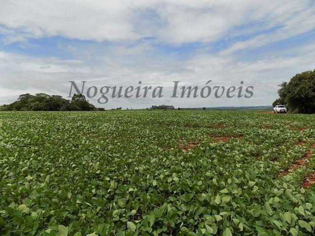 Sítio na região, área com 24 alqueires, terra vermelha (Nogueira Imóveis Rurais) - Foto 6