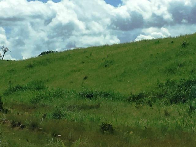 Fazenda de 137 alqueires em Abreulândia - To - Foto 12