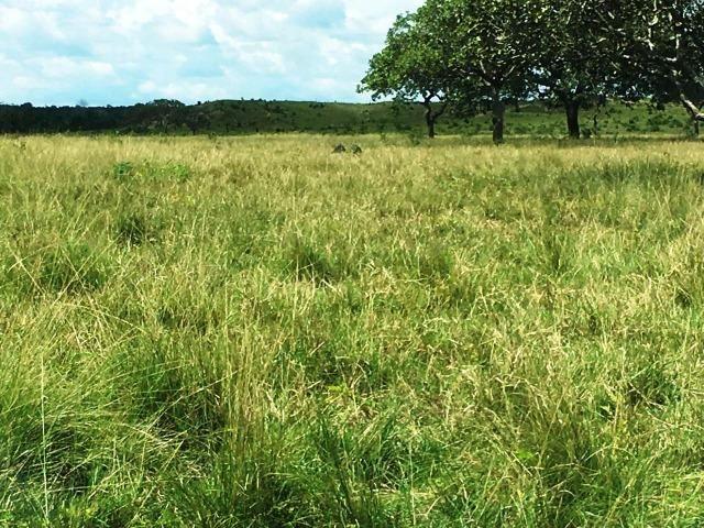 Fazenda de 137 alqueires em Abreulândia - To - Foto 2