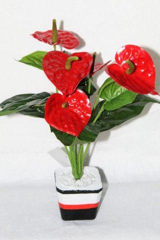 Planta antúrio Vermelha ( Envio Correios )