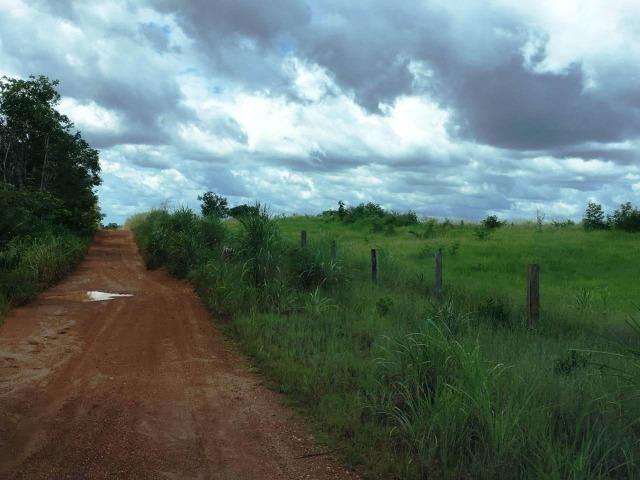 Fazenda de 137 alqueires em Abreulândia - To - Foto 8