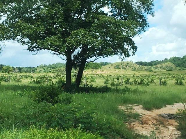 Fazenda de 137 alqueires em Abreulândia - To - Foto 15