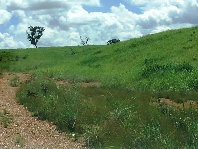 Fazenda de 137 alqueires em Abreulândia - To - Foto 11